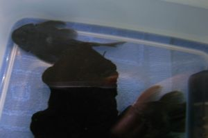 Aqua_20120219_008