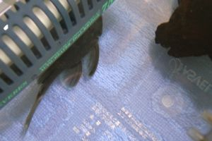 Aqua_20120219_009