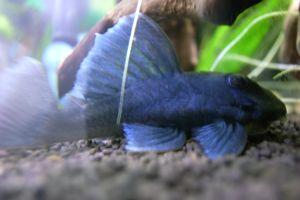 Aqua_20120219_01