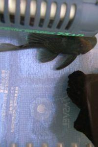 Aqua_20120219_010