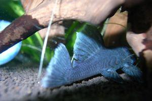 Aqua_20120219_02
