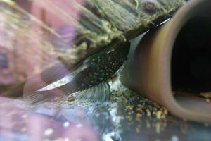 Aqua_20120219_03