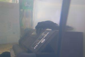 Aqua_20120219_06