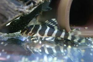 Aqua_20120219_11