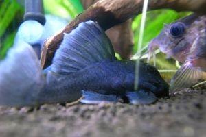 Aqua_20120219_12