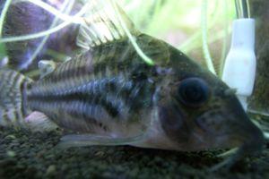 Aqua_20120219_13