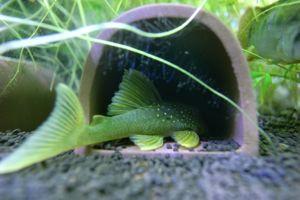 Aqua_20120219_14