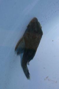 Aqua_20120303_31