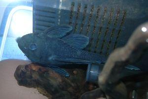 Aqua_20120325_06