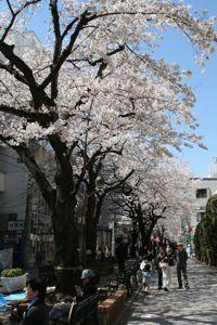 Sakura_20120407_4