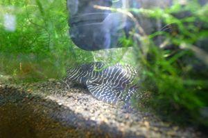 Aqua_20120716_0005