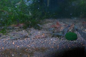 Aqua_20120716_0007