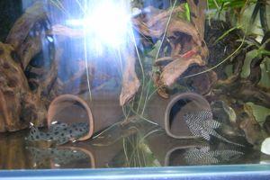 Aqua_20120716_0009