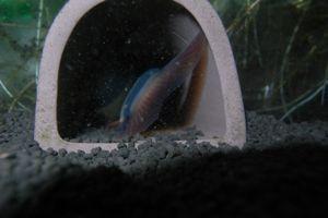Aqua_20120716_0011