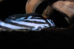 Aqua_20120811_005