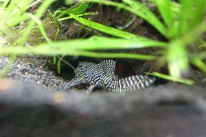 Aqua_20120811_008