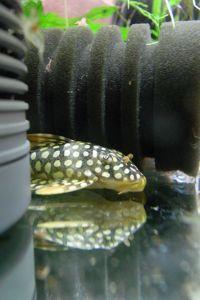 Aqua_20120811_010