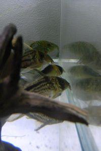 Aqua_20120811_011