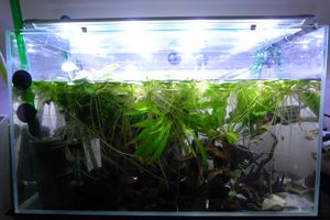 Aqua_20120811_012