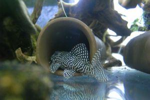 Aqua_20120824_01