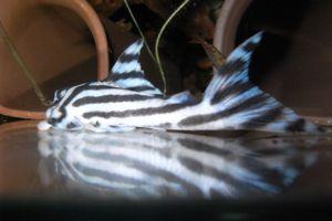 Aqua_20120824_03