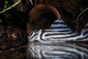 Aqua_20120824_04