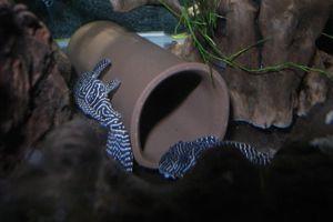 Aqua_20120908_02