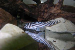 Aqua_20120908_04