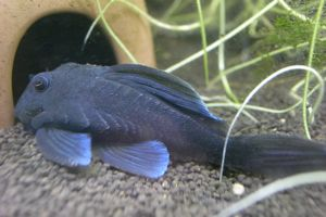 Aqua_20121028_2