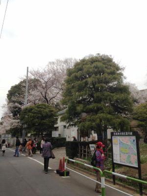 Sakura_2013_001