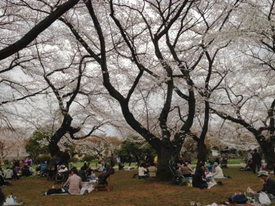 Sakura_2013_004