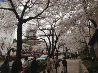 Sakura_2013_014