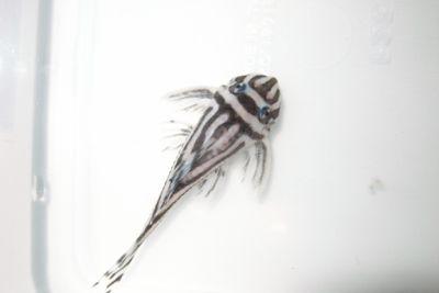 Aqua_20131215_001