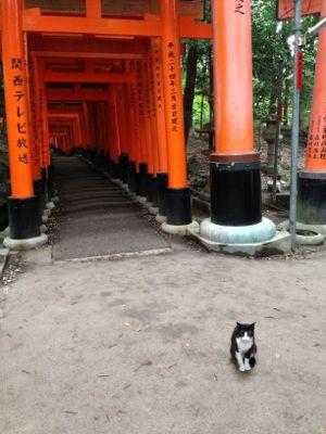 Kyoto_2014_09