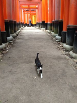 Kyoto_2014_10