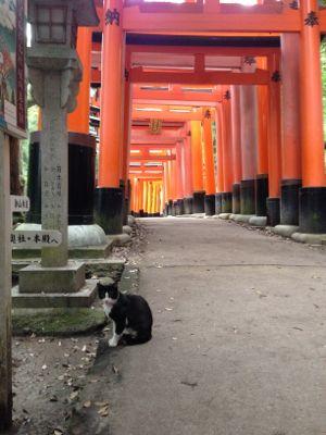 Kyoto_2014_11